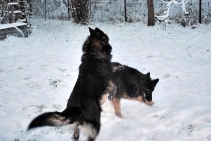 altdeutsche spielen im Schnee
